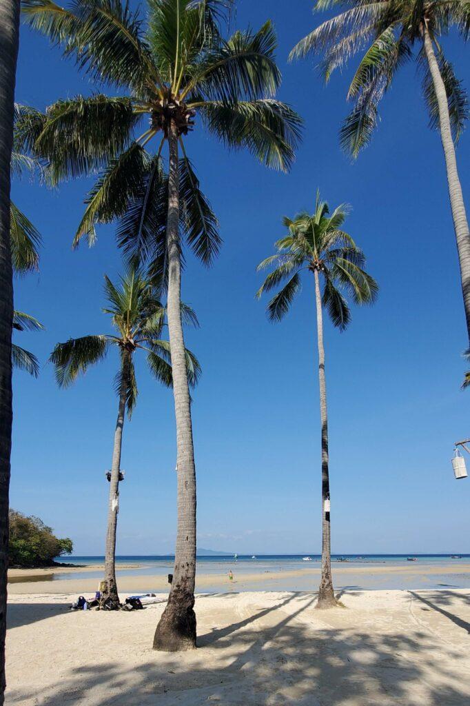 Palm trees in Loh Ba Kao Bay - Koh Phi Phi, Thailand