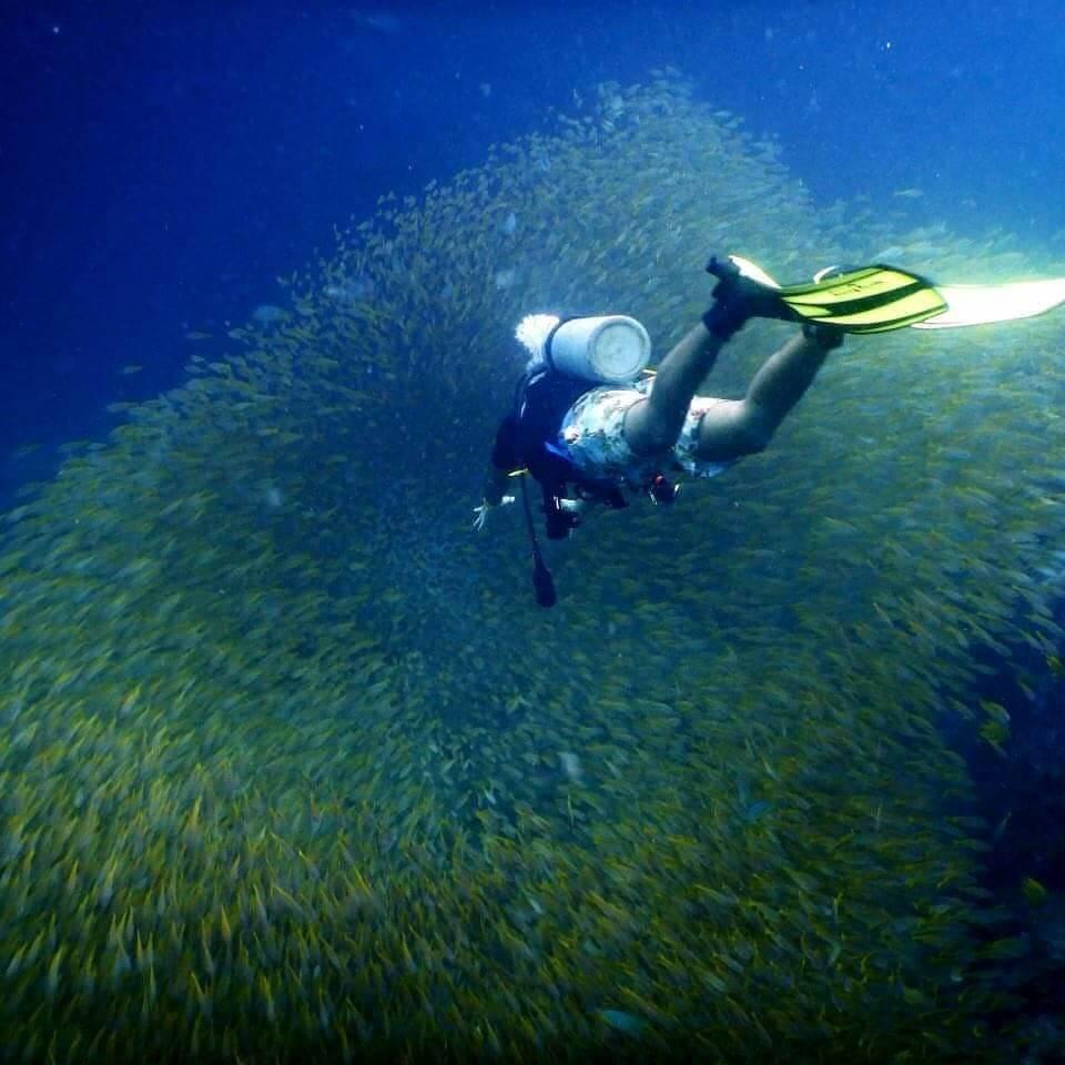 A scuba diver swims into a school of yellow snapper at Bida Nok dive site