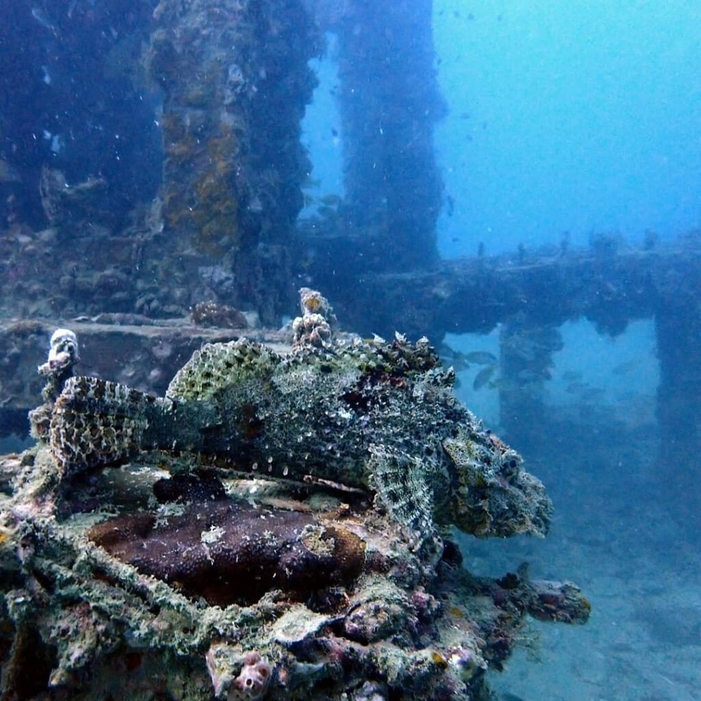 A scorpionfish blends in with the coral at Viking Cave dive site