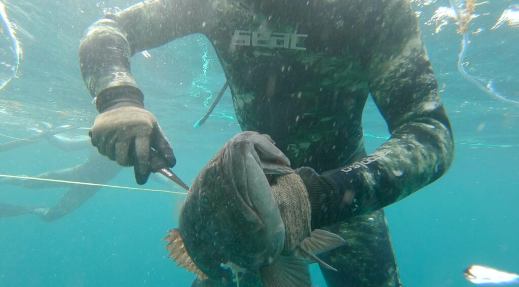Releasing a fish from a spearfishing line