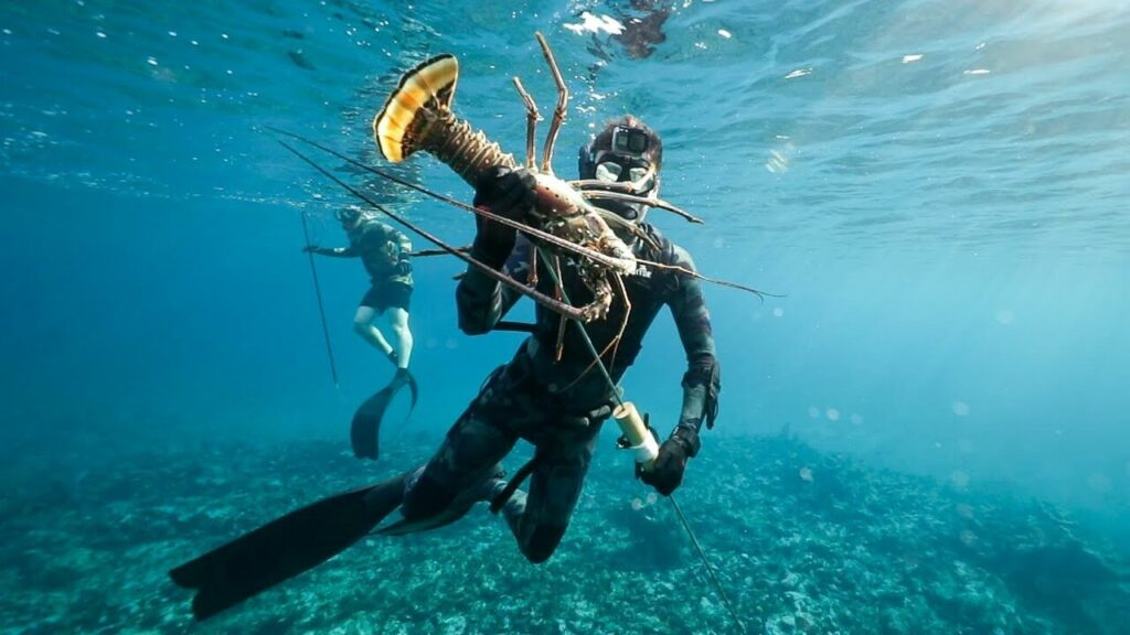 Spear-fisher catches a lobster with a pole-spear on a reef