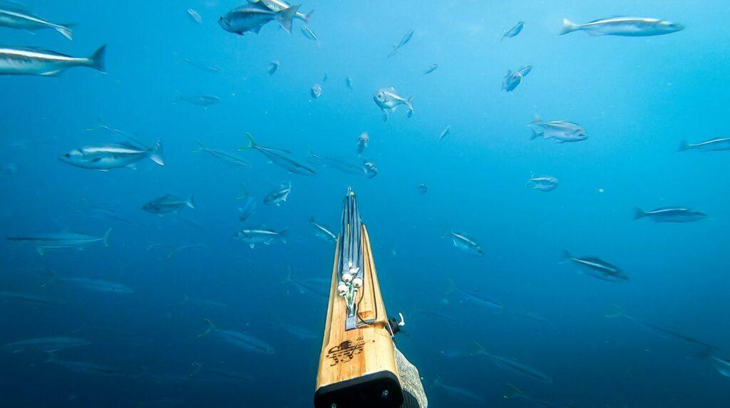 Swimming with a spear-gun underwater