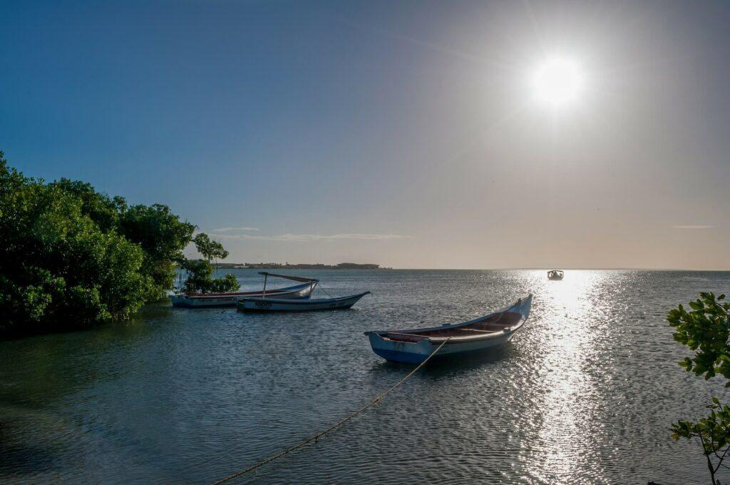 Small, wooden fishing boats near coastal mangroves in Venezuela