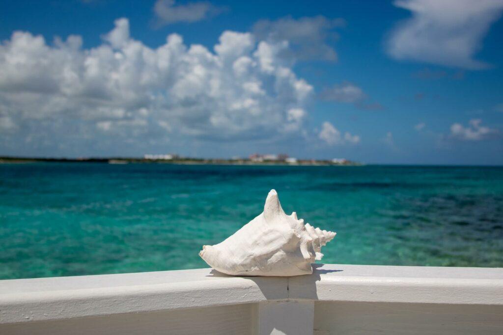 Conch shell near the ocean in Bermuda