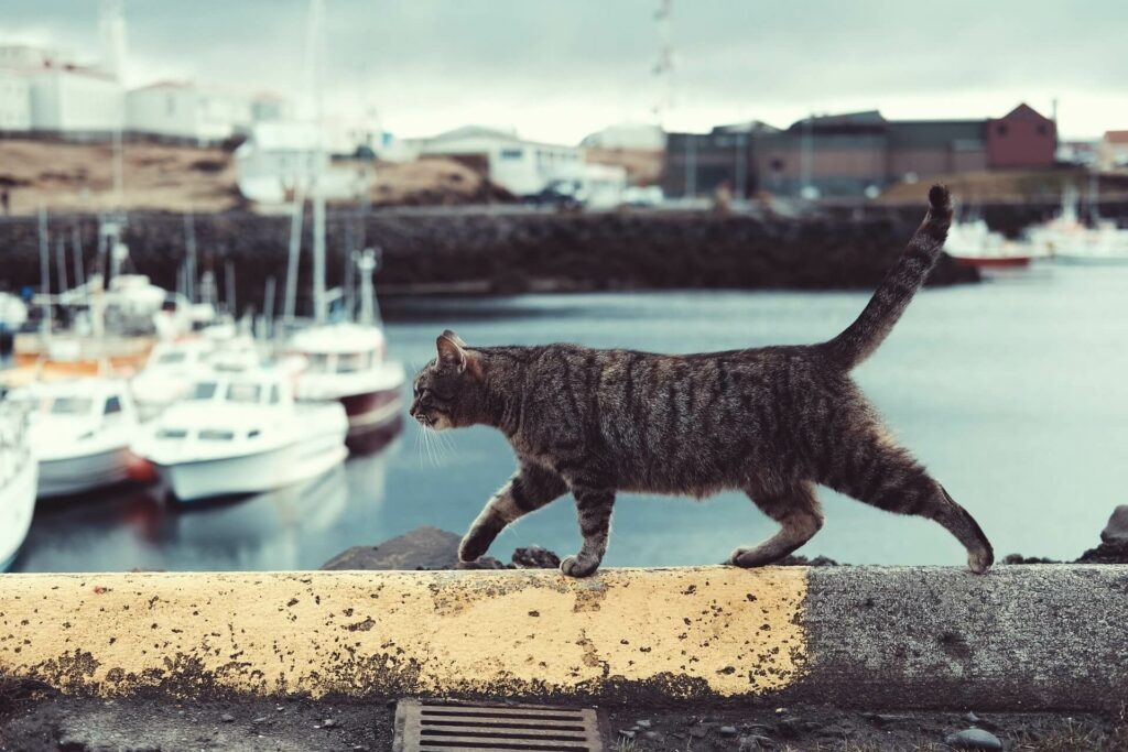 A cat strolls along the edge of a pier at a boat harbor