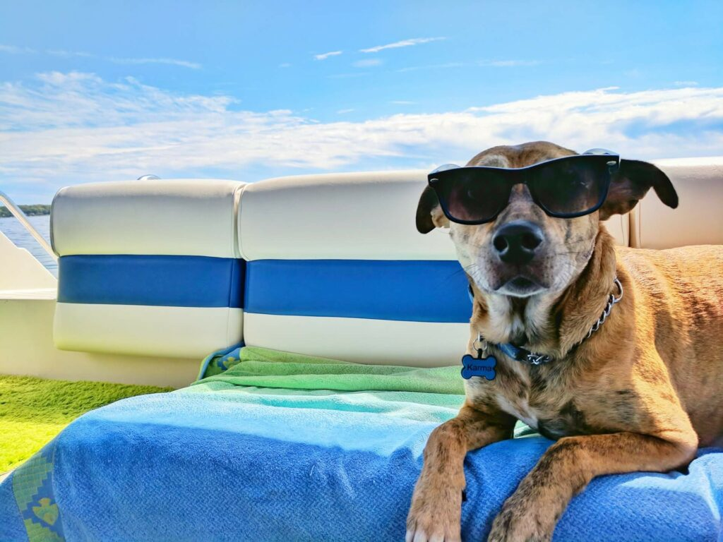 A dog wearing sunglasses on the deck of a boat