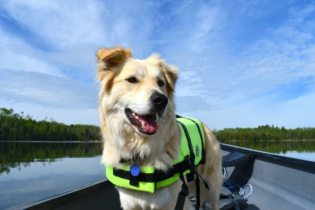A dog wears a life vest on a canoe in the water