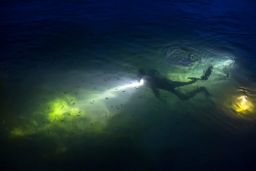 Night diving with dive torch