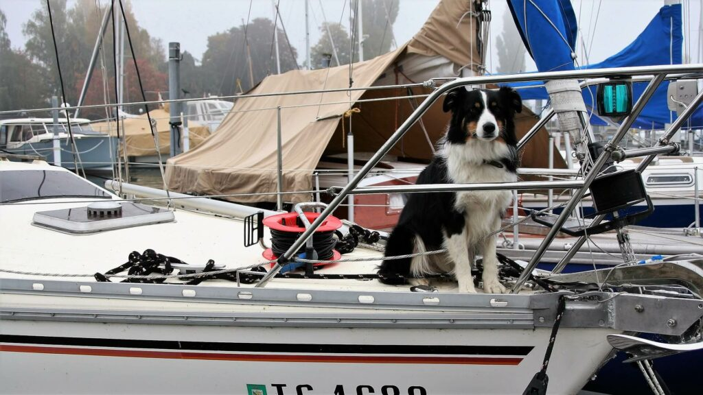 a dog sits at the bow of a house boat